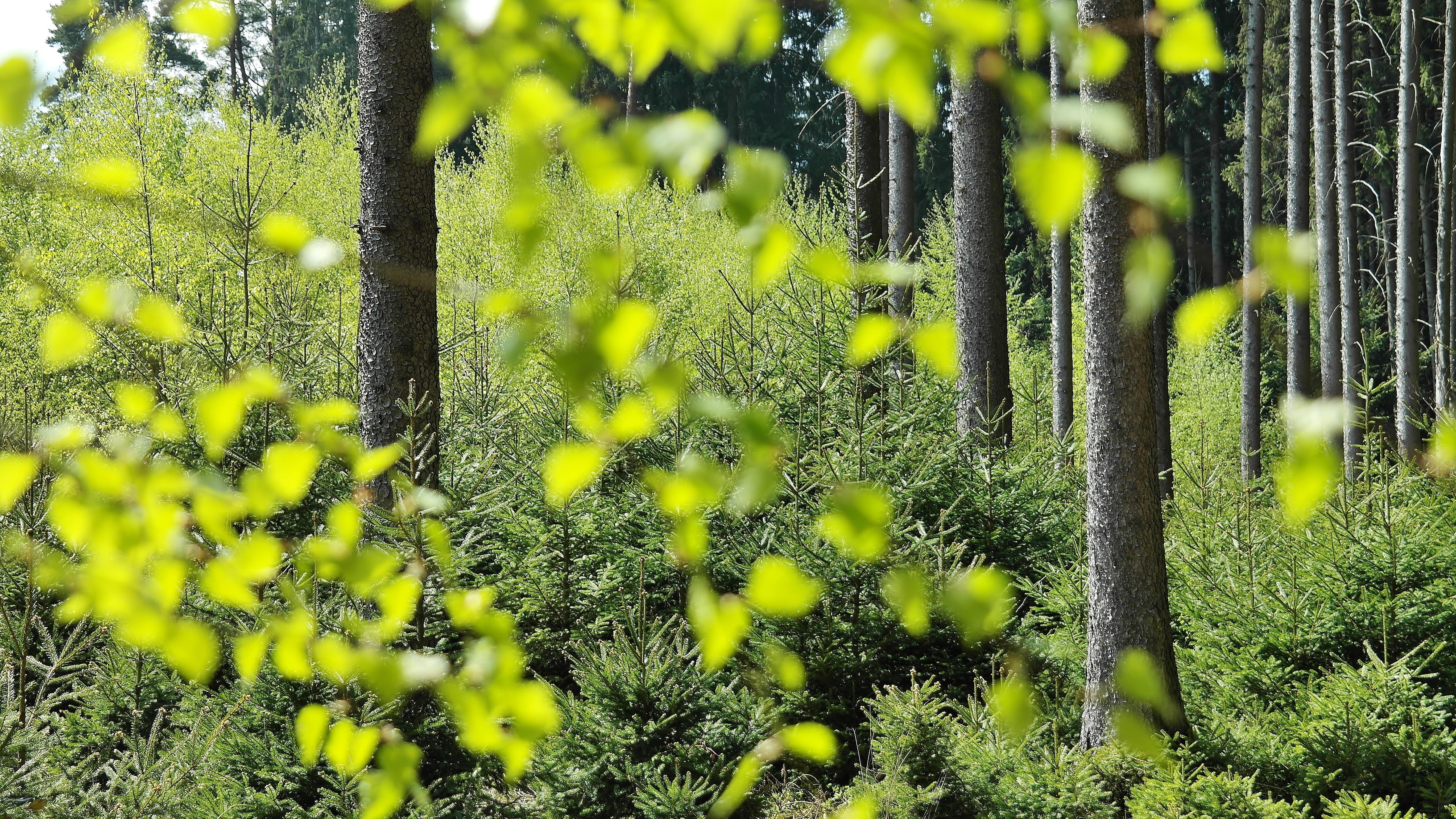 Nuevo Proceso en VUCE: Certificado CITES – Especies Amenazadas de Fauna y Flora Silvestres